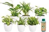 Ecoworld Makkelijke & Luchtzuiverende Kamerplanten Mix - 6 stuks - Ø 12 cm - Hoogte 30-40 cm incl. Potten Wit + Plantenvoeding