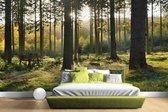 Een bosrijke omgeving op zonnige dag Fotobehang 380x265