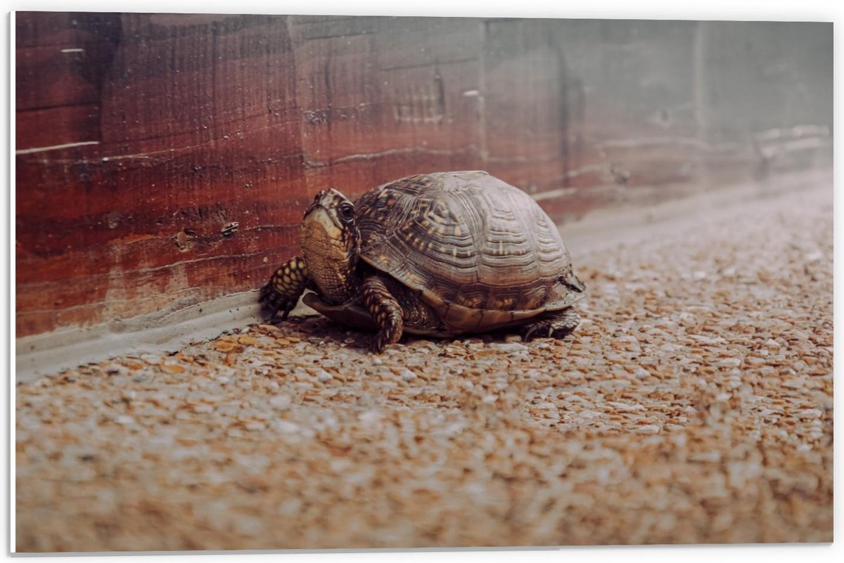 Forex - Sippe Schildpad - 60x40cm Foto op Forex