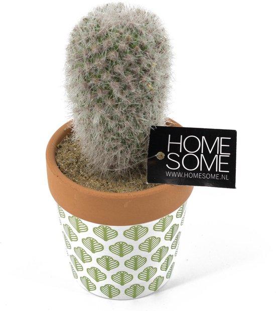Cactus kunst met potje