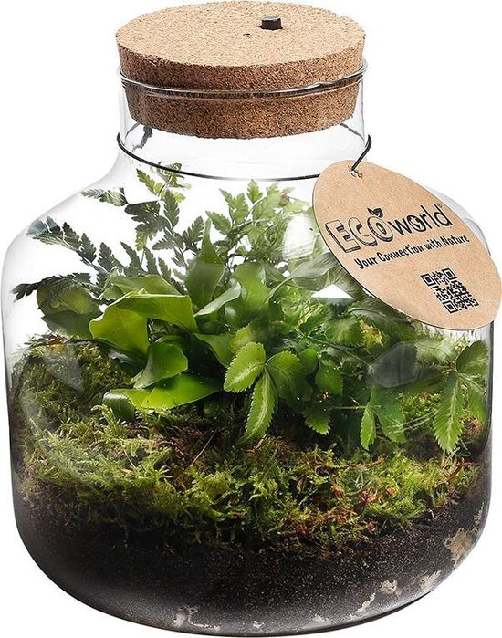 Ecoworld Jungle Biosphere - Ecosysteem met lamp - LED verlichting - 3 Varen Planten - Basic Glas - Ø 22 cm - Hoogte 23 cm