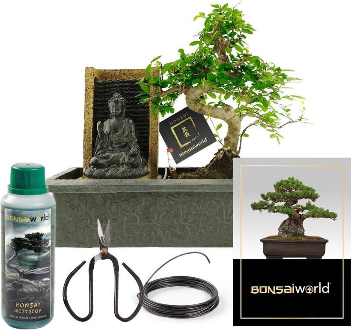 Bonsaiworld Bonsai Boeddha Waterval Set - Bonsai Starters Kit - Bonsai Boompje is 10 jaar oud - Hoogte️ 30-35 cm + Verzorgingskit - Bonsai- Schaar, Bo
