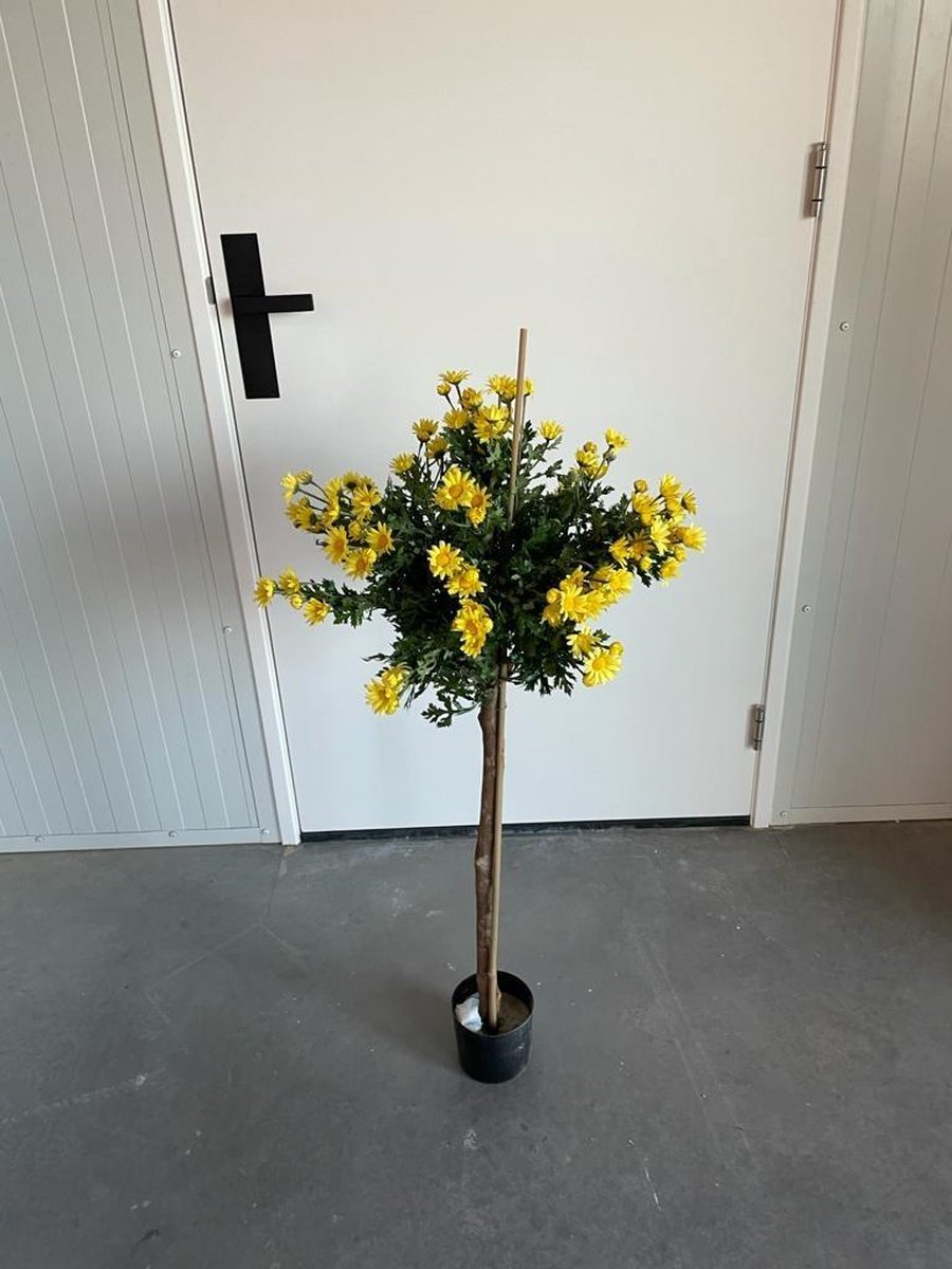 Showroom outlet Daisy Geel 120 cm