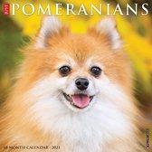 Pomeranian Kalender 2021