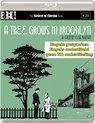A Tree Grows In Brooklyn (Masters Of Cinema) [Blu-ray]