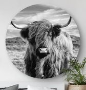 HIP ORGNL Highlander Round   Schotse hooglander / koe wanddecoratie   rond schilderij   wandcirkel   muurcirkel   ⌀  60 cm   dier / zwart / wit /   kunstwerken   dibond   aluminium   dieren
