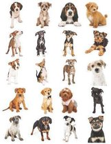 Adorable Puppies Notebook