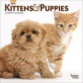 Kittens & Puppies 2021 Mini 7x7