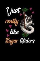 I Just Really Like Sugar Gliders
