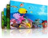 Aquarium achtergrond 3d poster 2-zijdig 40x60 cm