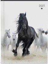 My favourite friends paarden agenda 2021 - 15.8 x 12 cm - lannoo -kudde paarden