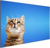 Kat met blauwe lucht Aluminium 90x60 cm - Foto print op Aluminium (metaal wanddecoratie)