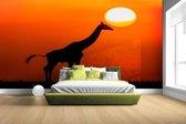 Giraffe bij zonsondergang Fotobehang 380x265