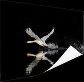 Vliegende zwaan Poster 150x75 cm - Foto print op Poster (wanddecoratie woonkamer / slaapkamer) / Dieren Poster
