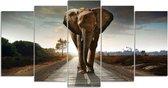 SEOS Shop ® Diamond Painting Pakket Safari Olifant - 5 Luik - Full -  Vierkant  - Dotz