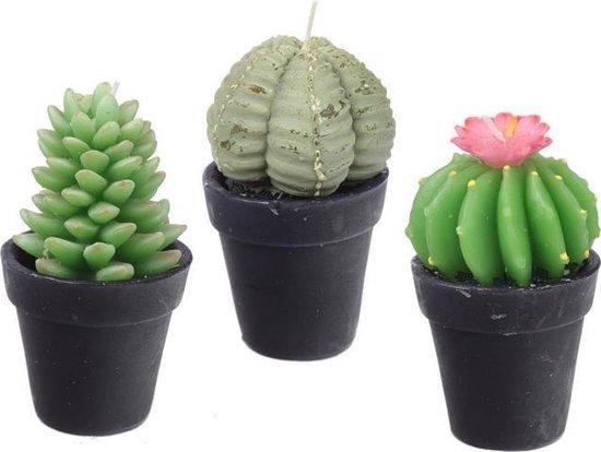 Set van 3 kaarsen cactussen in pot