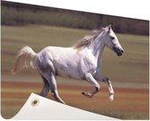 Vrolijk wit paard loopt in grasveld Tuinposter 60x40 cm - klein - Tuindoek / Buitencanvas / Schilderijen voor buiten (tuin decoratie)
