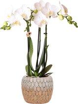 Kolibri Orchids | Phalaenopsis orchidee plant in cementen Marrakesh pot oranje - 40cm hoog - Ø9cm | wit