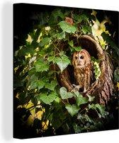 Bosuil in een boomstam Canvas 90x90 cm - Foto print op Canvas schilderij (Wanddecoratie woonkamer / slaapkamer)