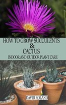 How to Grow Succulents and Cactus