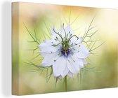 Close-up van de bloeiende nigelle Canvas 60x40 cm - Foto print op Canvas schilderij (Wanddecoratie woonkamer / slaapkamer)