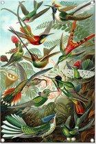 Graphic Message - Tuinposter - Vogels - Outdoor Tuin Doek - Kunstformen - Haeckel - Buiten Schutting