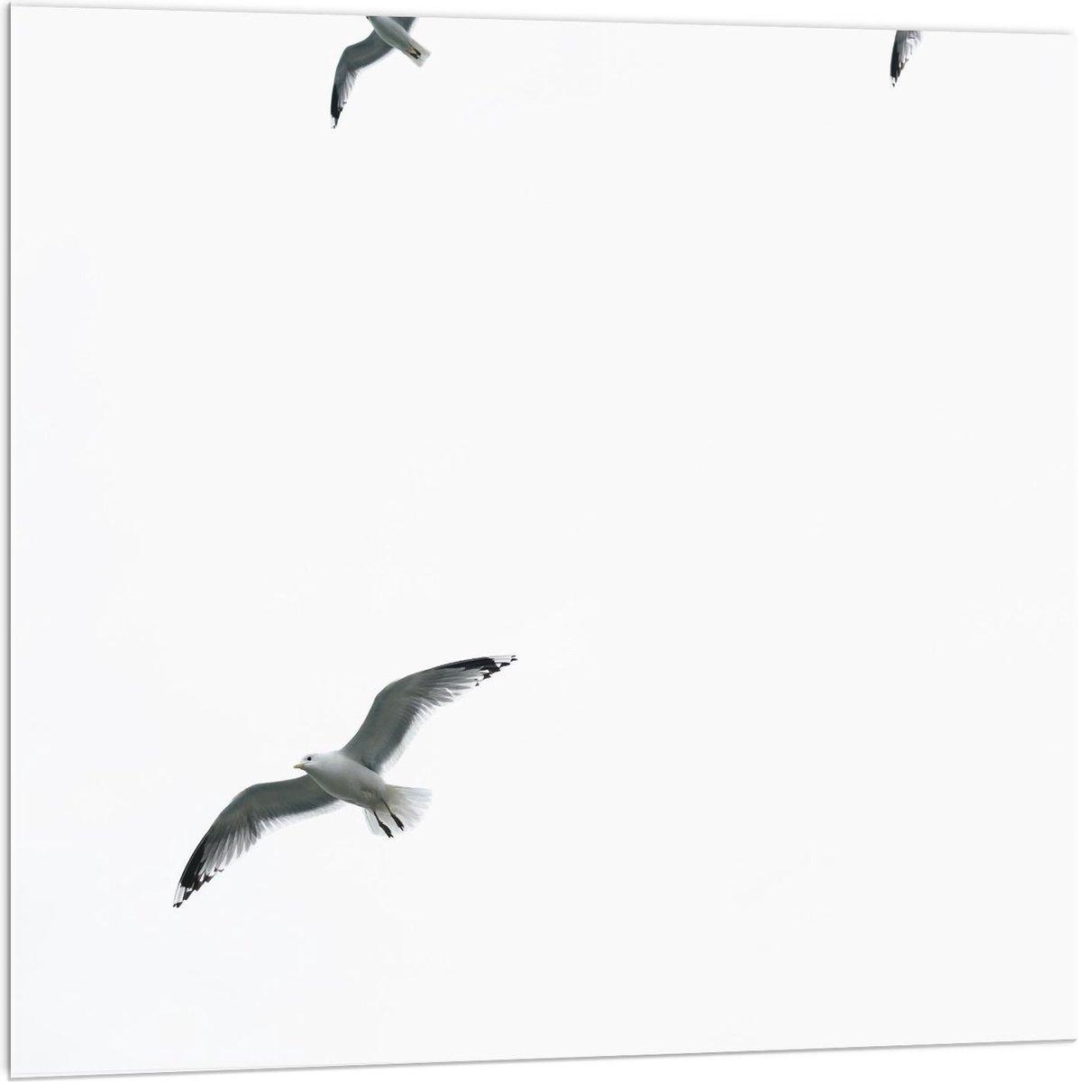 Plexiglas - Groep Meeuwen in de Lucht - 100x100cm Foto op Plexiglas (Met Ophangsysteem)