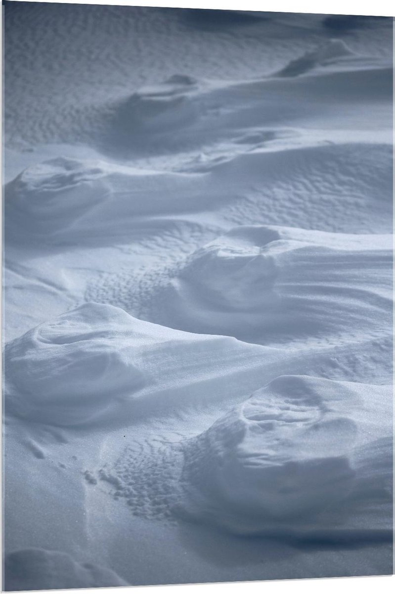 Plexiglas - Witte mouse Close Up - 80x120cm Foto op Plexiglas (Met Ophangsysteem)