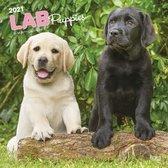 Labrador Retriever Puppies Kalender 2021