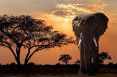 Schilderij - Olifant bij zonsondergang