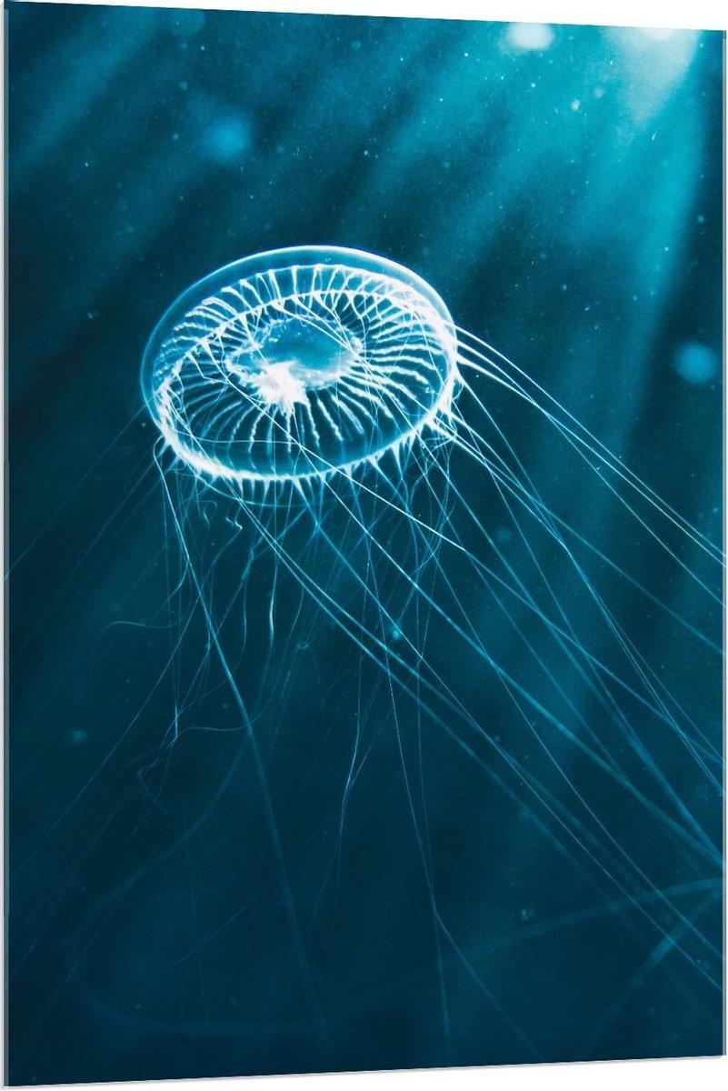Plexiglas - Kleine Blauwe Kwal in het Water - 80x120cm Foto op Plexiglas (Wanddecoratie op Plexiglas)