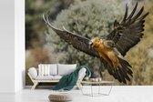 Behang - Fotobehang - Lammergier met uitgestrekte vleugels - Breedte 390 cm x hoogte 260 cm