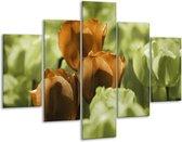 Glasschilderij Tulpen | Bruin, Groen, Zwart | 100x70cm 5Luik | Foto print op Glas |  F002764