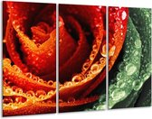Glasschilderij Roos | Rood, Oranje, Groen | 120x80cm 3Luik | Foto print op Glas |  F003841
