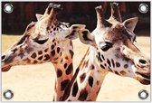 Tuinposter –Giraffenhoofden – 150x100 Foto op Tuinposter (wanddecoratie voor buiten en binnen)