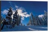 Dibond –Blauwe Lucht met Besneeuwde Bomen– 40x30 Foto op Aluminium (Wanddecoratie van metaal)