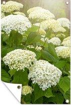Tuinposter Hortensia (2) - Een zee van witte hortensia's tuinposter los doek 80x120 cm - Tuindoek/Buitencanvas/Schilderijen voor buiten (tuin decoratie)