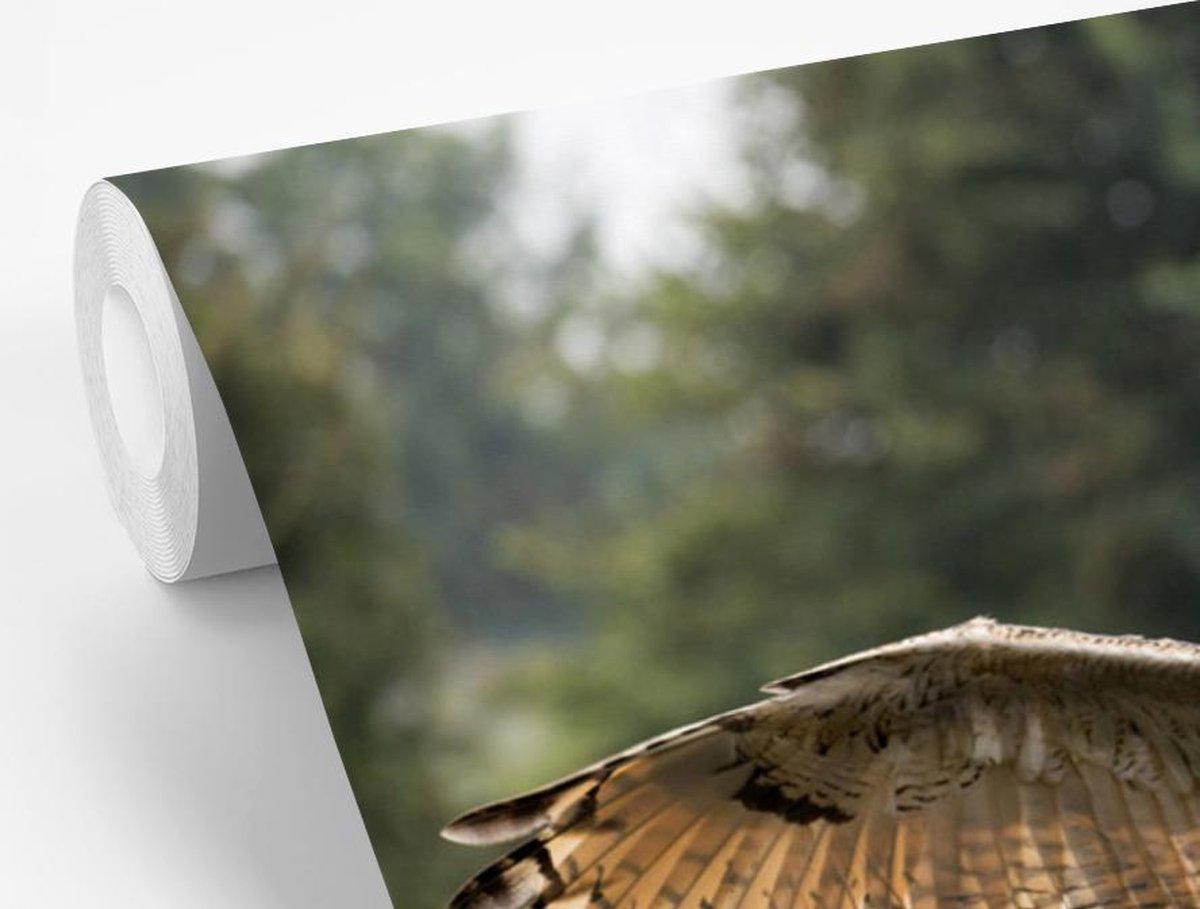 Fotobehang vinyl - Oehoe landt op een tak breedte 385 cm x hoogte 280 cm - Foto print op behang (in