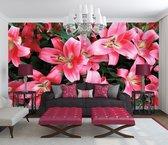 Pink Photomural, wallcovering