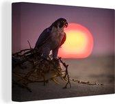 Slechtvalk bij zonsopgang Canvas 80x60 cm - Foto print op Canvas schilderij (Wanddecoratie woonkamer / slaapkamer)