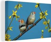 Twee Zebravinken in de blauwe lucht Canvas 180x120 cm - Foto print op Canvas schilderij (Wanddecoratie woonkamer / slaapkamer) XXL / Groot formaat!