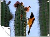 Tuinposter - Oriole op een cactus - 160x120 cm - XXL