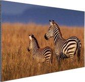 Moeder en baby zebra Aluminium 120x80 cm - Foto print op Aluminium (metaal wanddecoratie)