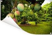 Mango's aan Tuinposter 120x80 cm - Tuindoek / Buitencanvas / Schilderijen voor buiten (tuin decoratie)