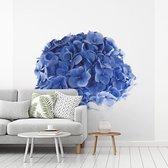 Fotobehang vinyl - Hortensia tegen een witte achtergrond breedte 260 cm x hoogte 260 cm - Foto print op behang (in 7 formaten beschikbaar)