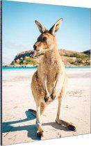 Een kangoeroe op het strand Aluminium 20x30 cm - klein - Foto print op Aluminium (metaal wanddecoratie)