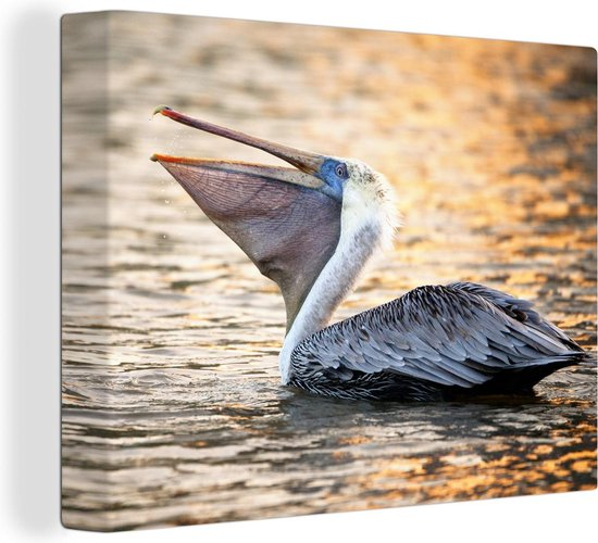 Een bruine pelikaan liggend in het water tijdens een zonsondergang 160x120 cm - Foto print op Canvas schilderij (Wanddecoratie woonkamer / slaapkamer) XXL / Groot formaat!