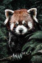 Kleine Rode Panda op Textiel in Frame | Staand 120 x 180 cm | Breed zwart Textielframe 27 mm | Luxe uitstraling | Dieren schilderijen | Kwaliteit wanddecoratie | Red Panda op verwisselbare peesdoek
