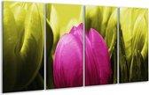 Glasschilderij Tulp | Roze, Groen | 160x80cm 4Luik | Foto print op Glas |  F003711