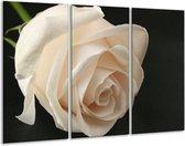 Glasschilderij Roos | Wit, Zwart, Groen | 120x80cm 3Luik | Foto print op Glas |  F000533